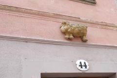 Hausschaf in Dresden