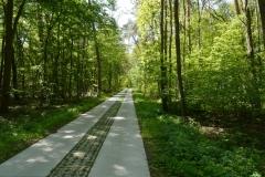 Elberadweg bei Magdeburg