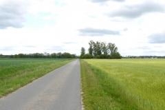 Elberadweg bei Torgau