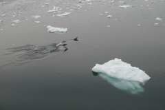Eselspinguine im Lemaire Channel