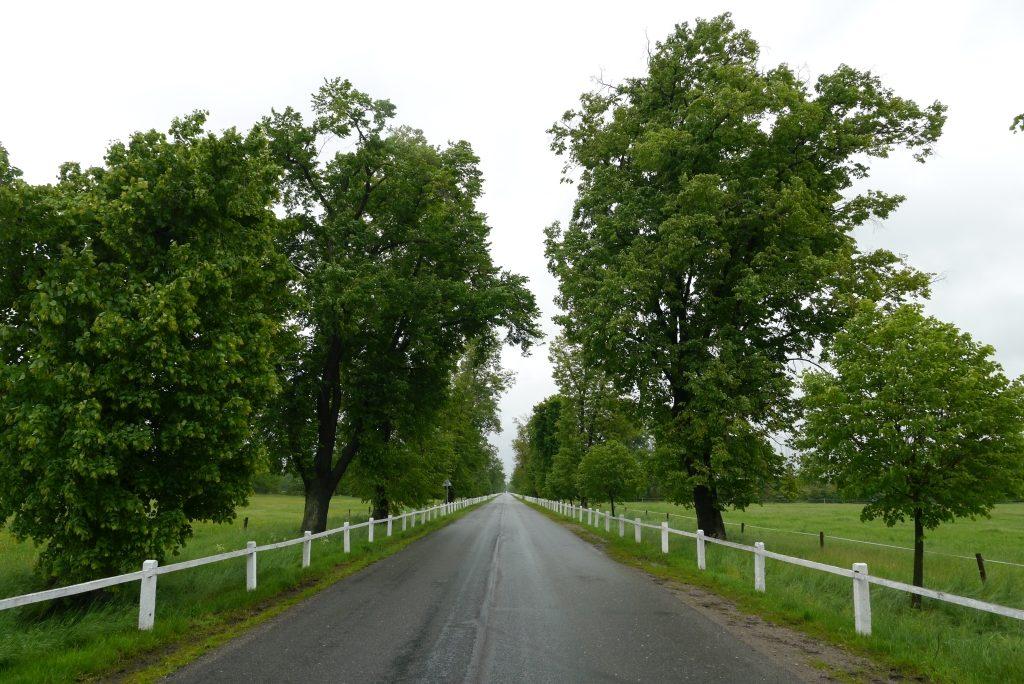 Elberadweg bei Pardubice
