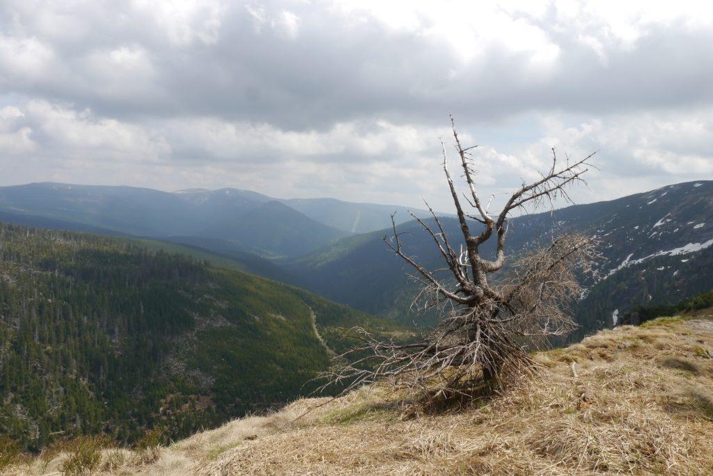 Blick übers Riesengebirge